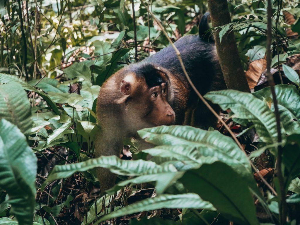 Babuino escondido entre ramas